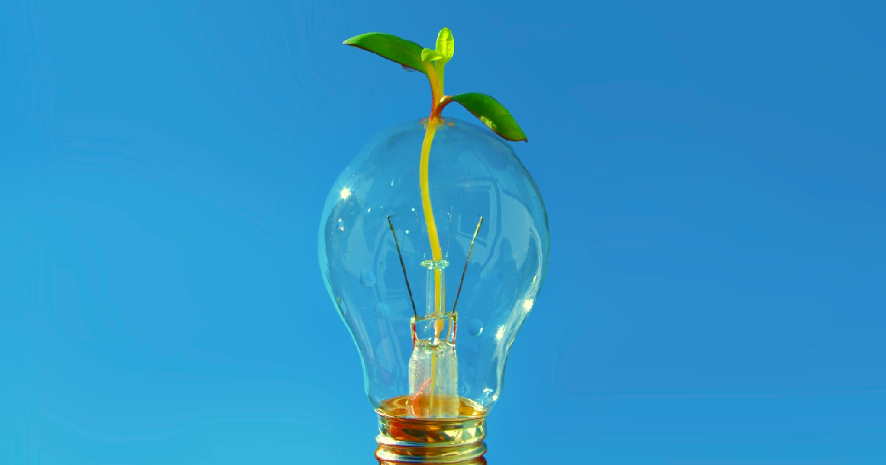 Photo of lightbulb with sapling growing inside